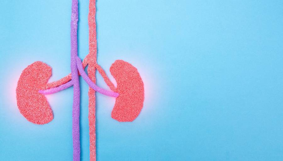Debunking Common Myths About Kidneys
