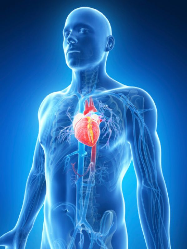 Varying Heart Attack Symptoms for Men and Women
